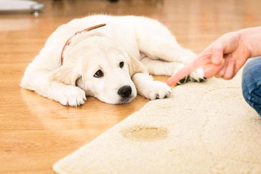 Dicas simples podem fazer a diferença no convívio com seu cãozinho   Foto: Reprodução