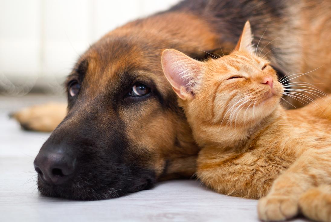 Animais de estimação podem transmitir doenças   Foto: Reprodução