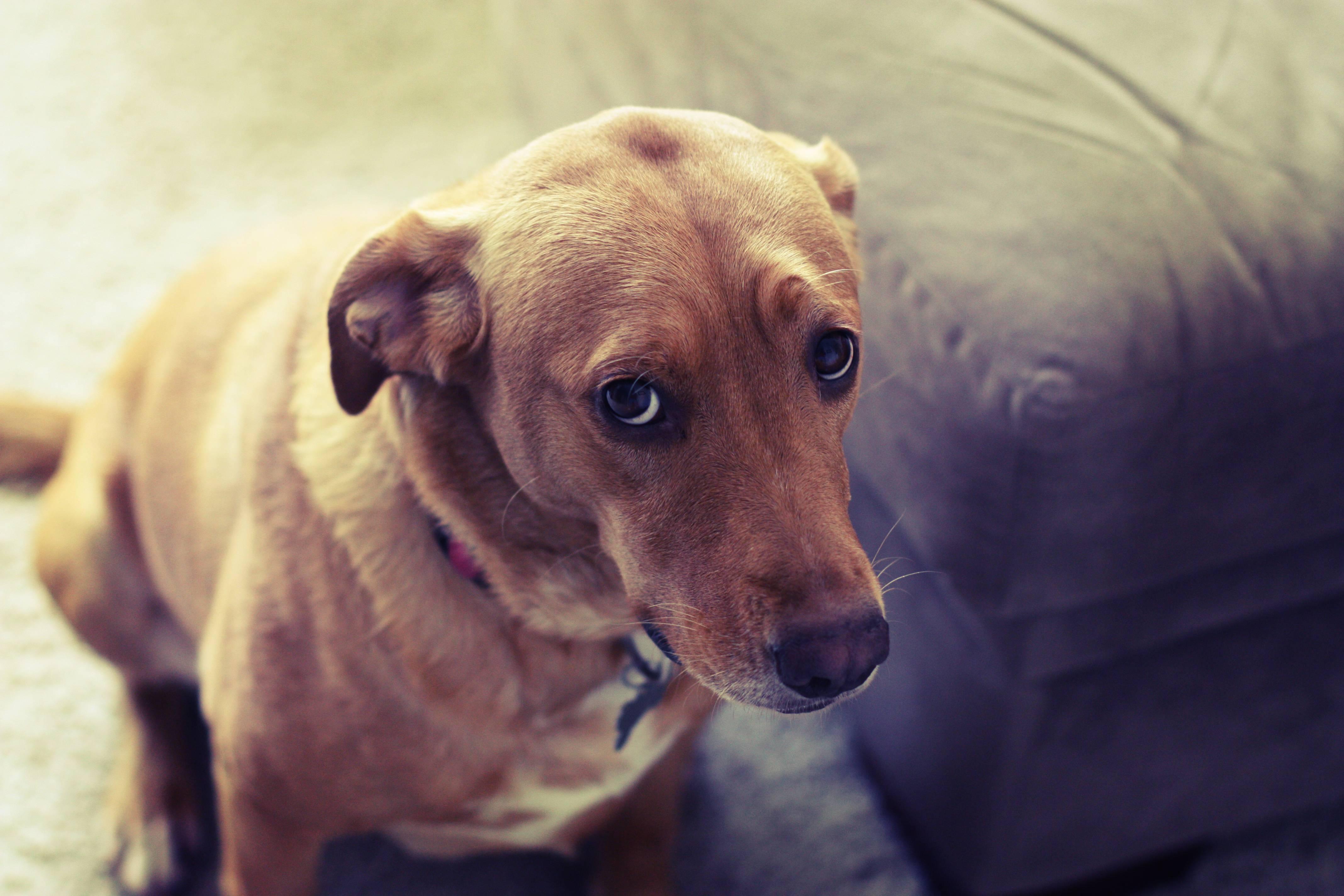 Especialista dá dicas para que você lide melhor com o seu cão quando ele aprontar | Foto: Reprodução / Pinterest