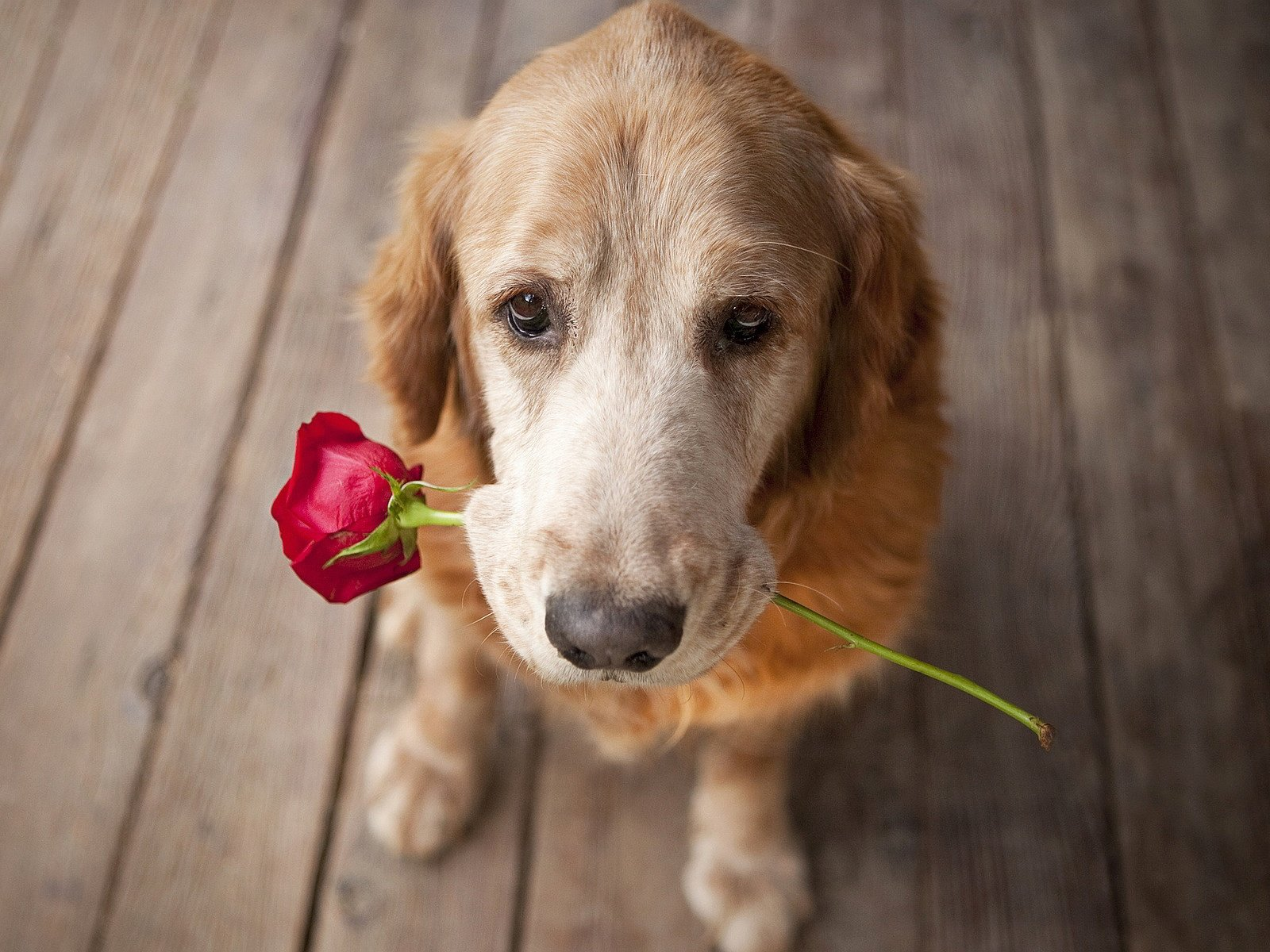 Não é preciso teoria para perceber as demonstrações de amor e carinho que os cães nos dão o tempo todo | Foto: Reprodução