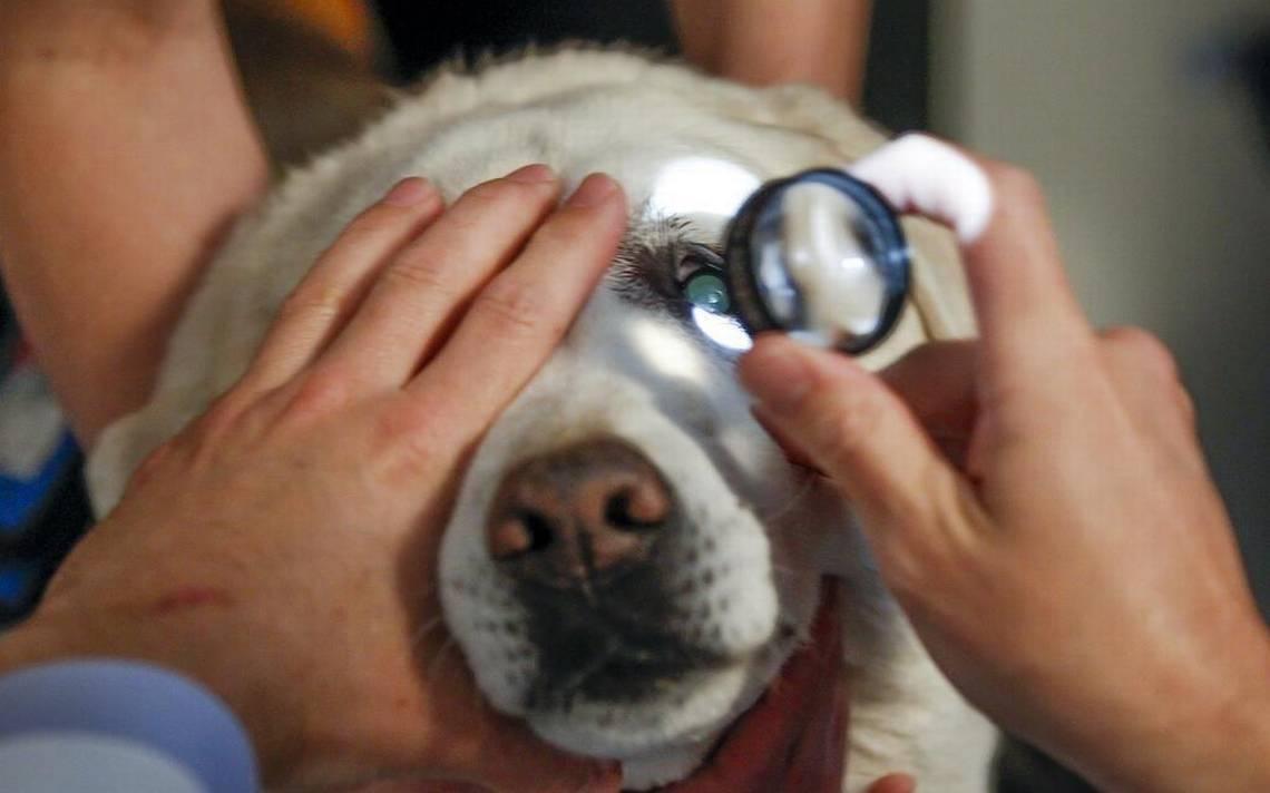 Cuidar de um cachorro cego não é tarefa fácil, mas dicas podem ajudar muito | Foto: Reprodução
