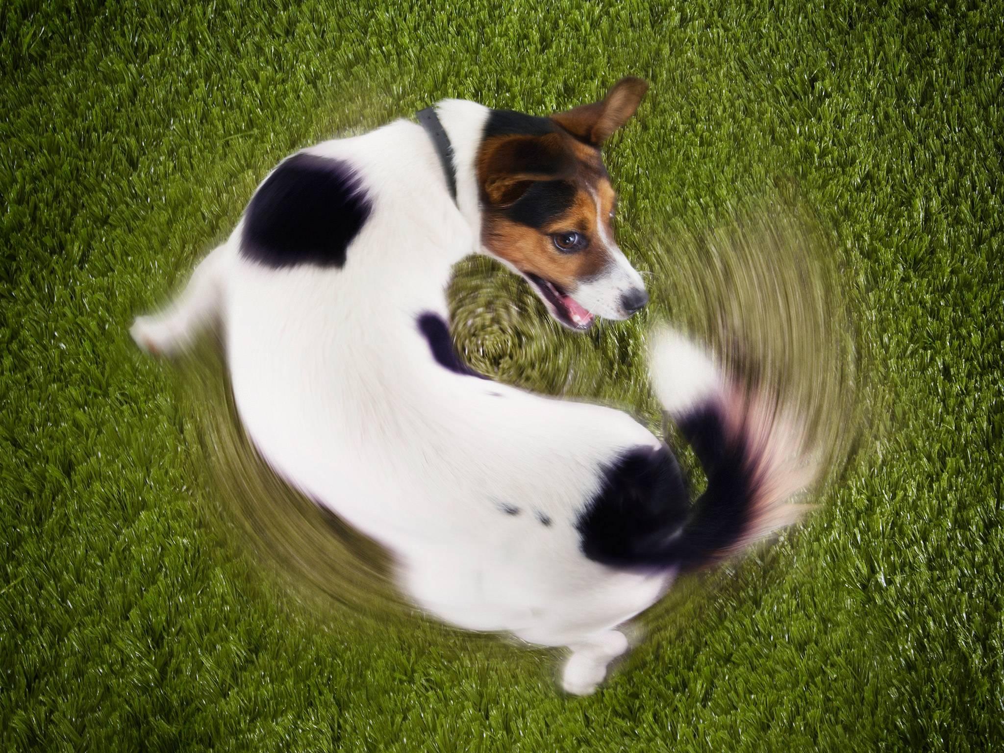 Você sabe dizer se as manias do seu cachorro são inofensivas ou se tornaram compulsão? | Foto: Reprodução