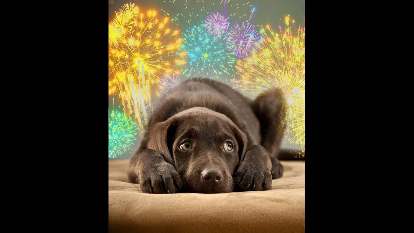 Veja como fazer seu seu cachorro perder o medo de fogos de artifício | Foto: Reprodução