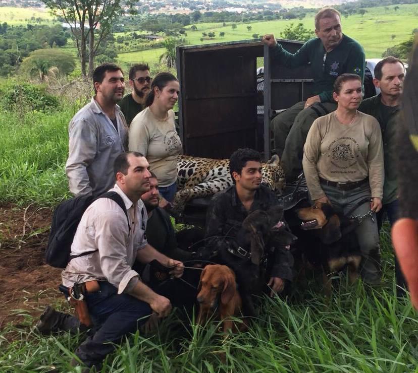Força tarefa foi necessária para capturar animal de 140 kg | Foto: Divulgação