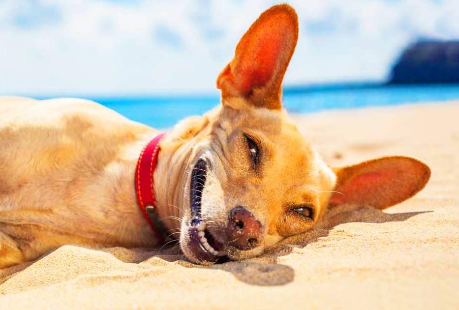 Calor pra cachorro! Confira as MELHORES DICAS para refrescar seu pet | Foto: Reprodução