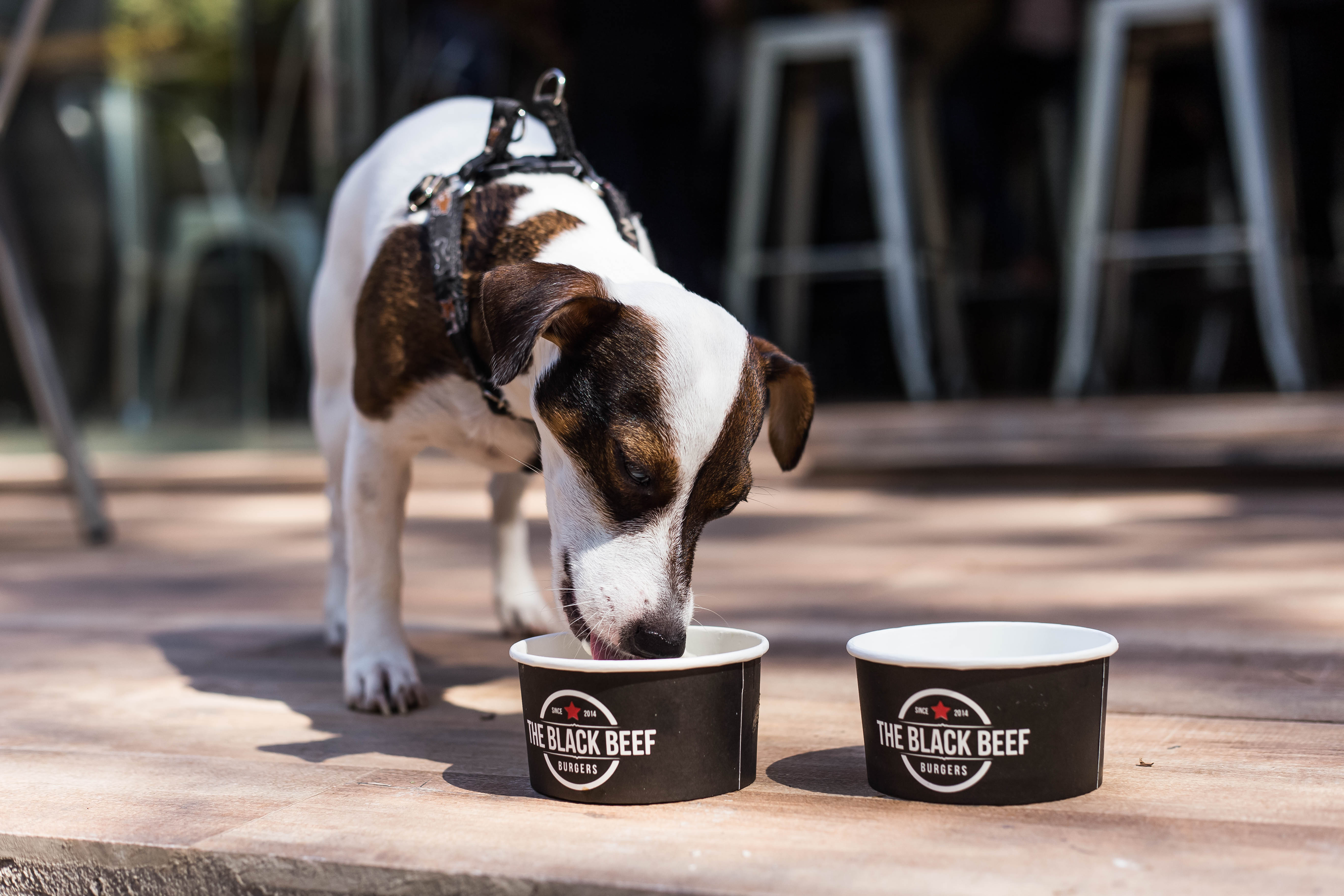 The Black Beef traz milkshakes artesanais e menu canino a Goiânia | Foto: Rômulo Juracy
