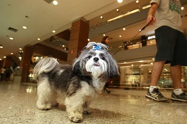 Cães e gatos agora podem passear pelo Goiânia Shopping | Foto: Reprodução