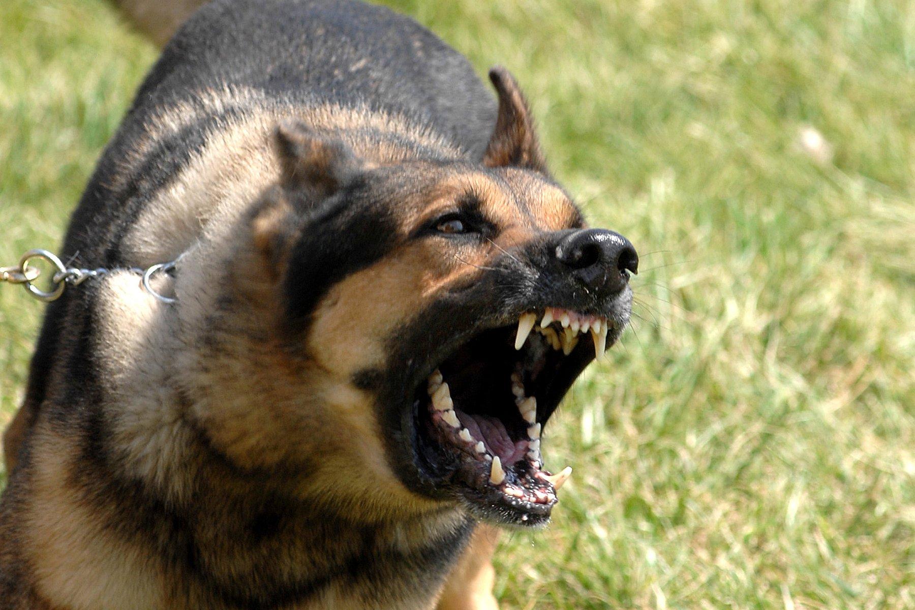 Como acostumar meu cachorro com outras pessoas e animais? Esse é uma pergunta frequente   Foto: Reprodução