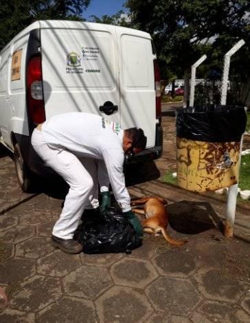Coleta de animais feita pela Comurg em abril de 2018 nas imediações do Hospital de Doenças Tropicais (HDT), Jardim Bela Vista, em Goiânia | Foto: Reprodução / Prefeitura de Goiânia