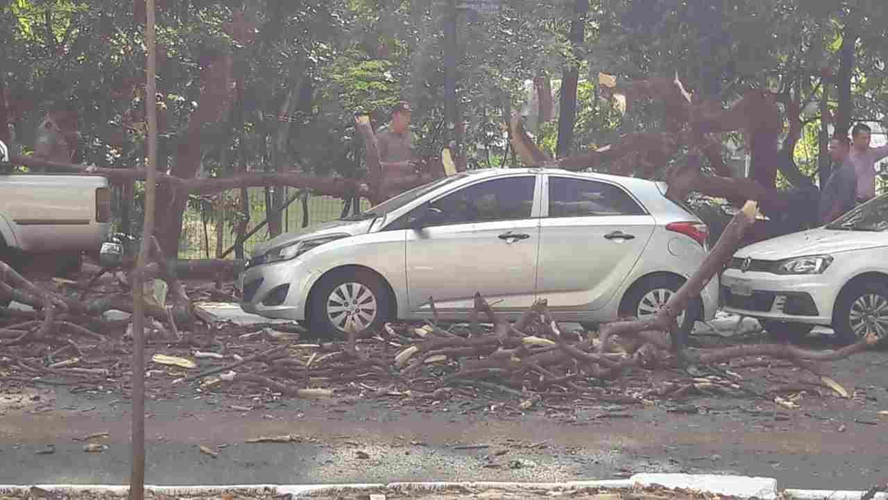 Árvore velha caiu sobre três carros na Alameda dos Buritis e causou danos | Foto: Leitor Assis