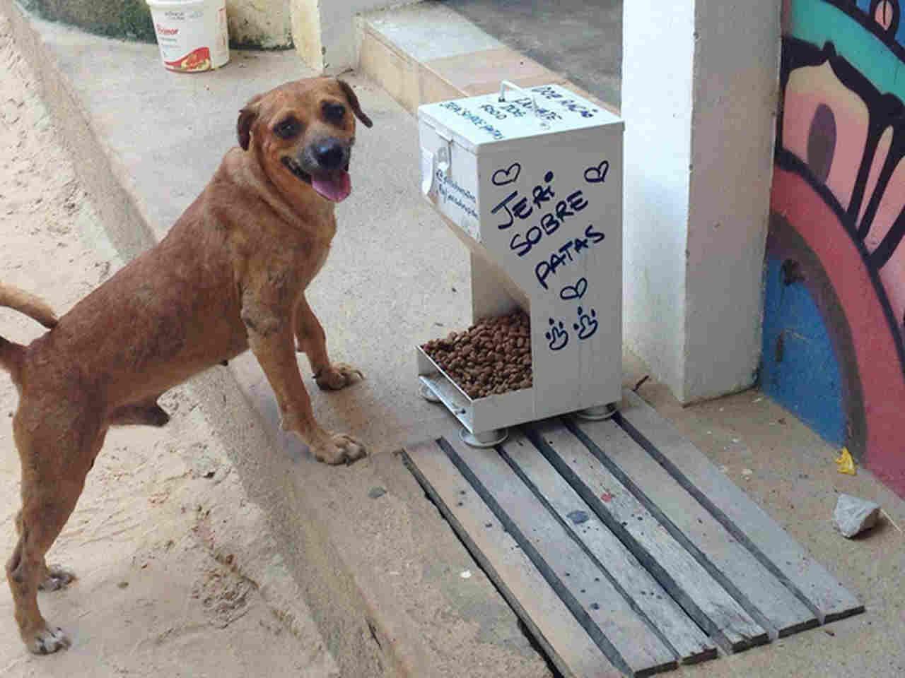 Vereador quer comedouros para animais em praças de Goiânia | Foto: Reprodução