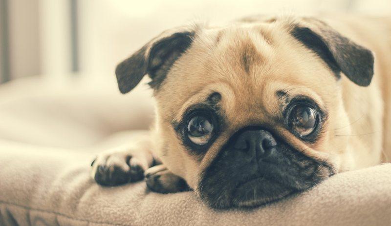 Brigar com seu cachorro caso ele faça as necessidades no lugar errado não o fará aprender a fazer no lugar certo | Foto: Pexels