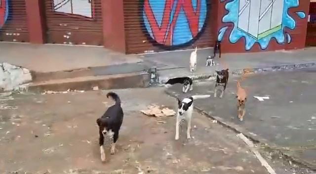 Cachorro são a família de morador de rua em Goiânia   Foto: Reprodução