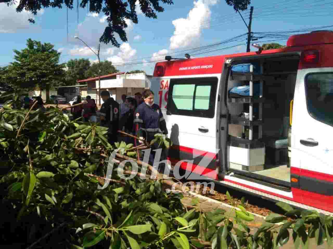 Funcionário da Prefeitura de Goiânia morre ao cair de árvore enquanto podava