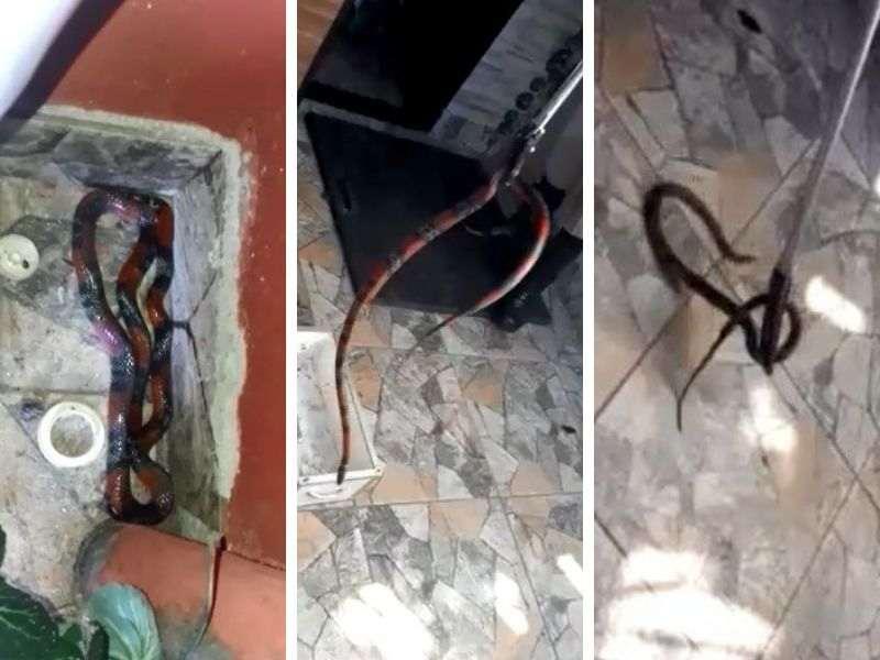 Bombeiros resgatam cobra-coral em banheiro de casa em Aparecida | Foto: Leitor / Folha Z