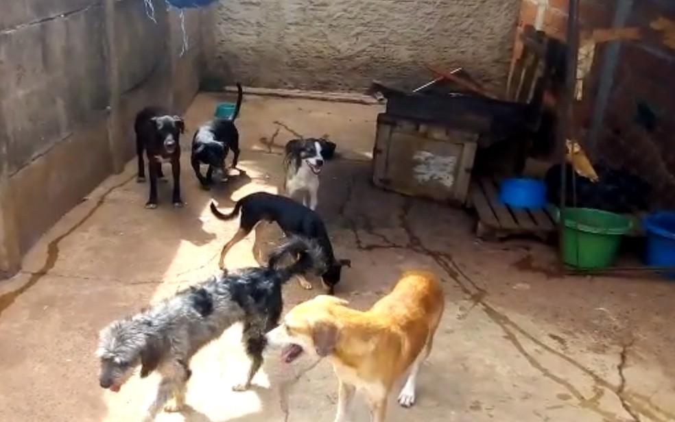 cachorros envenenados abrigo Goiânia