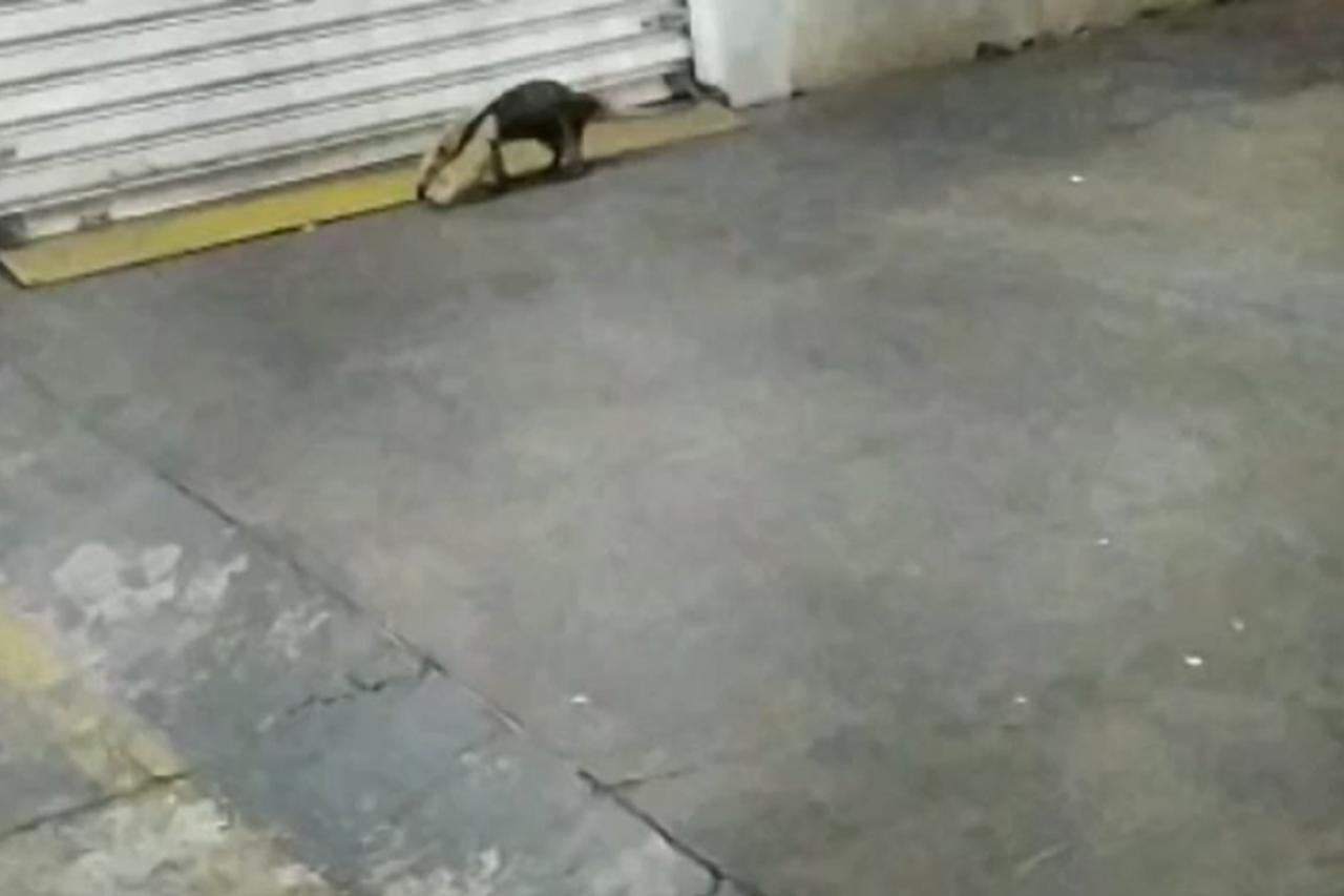 tamanduá Centro Aparecida